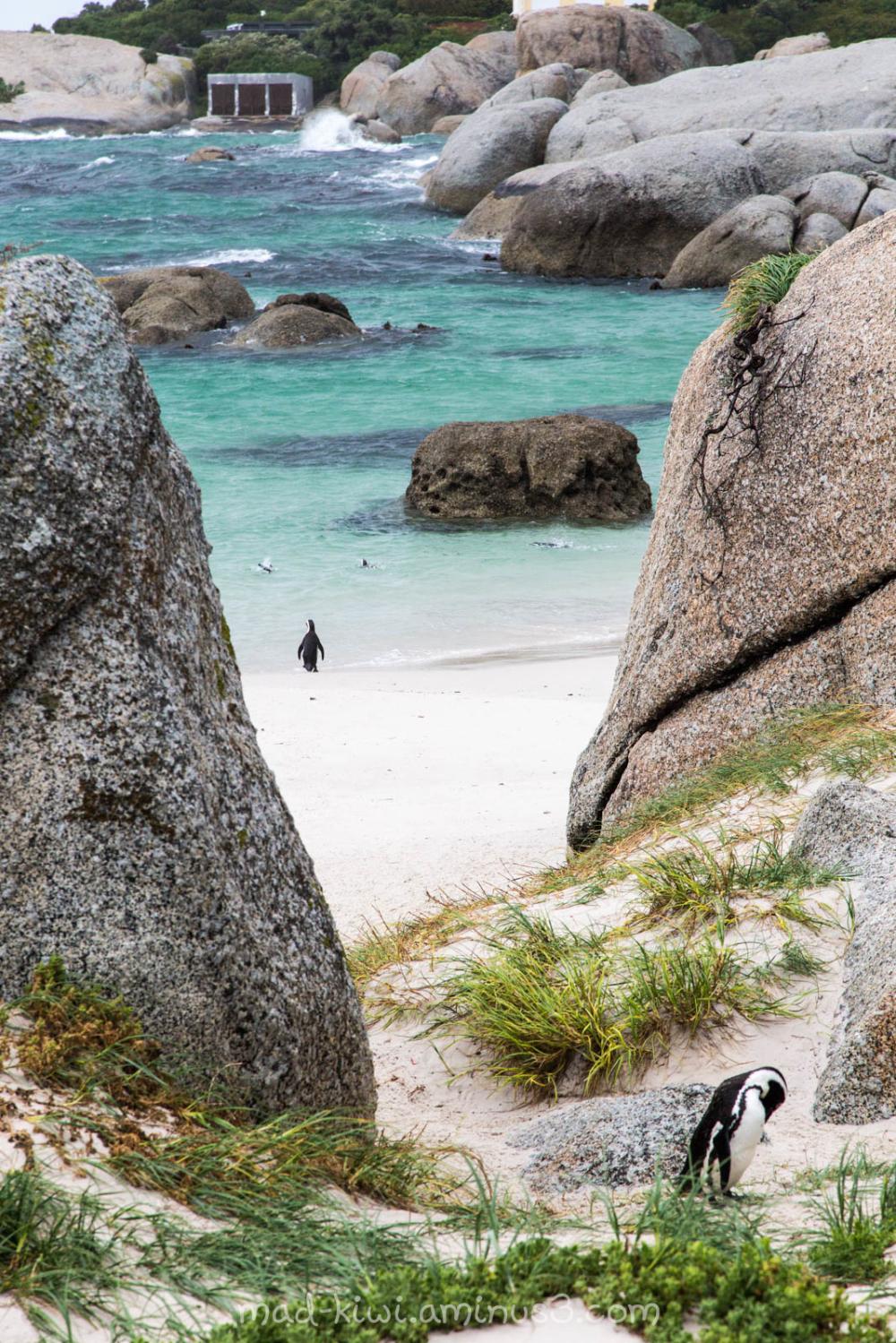 Penguin IV