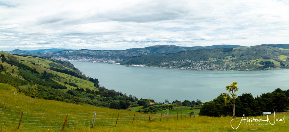 Otago Harbor
