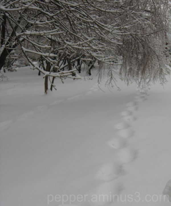 Foot-print in snow!