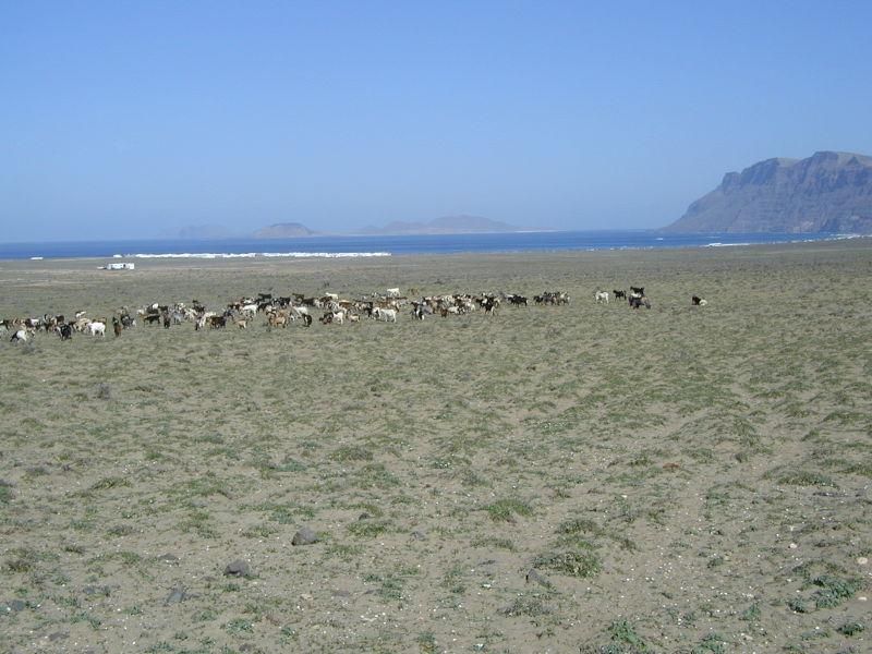 Desert La Caleta