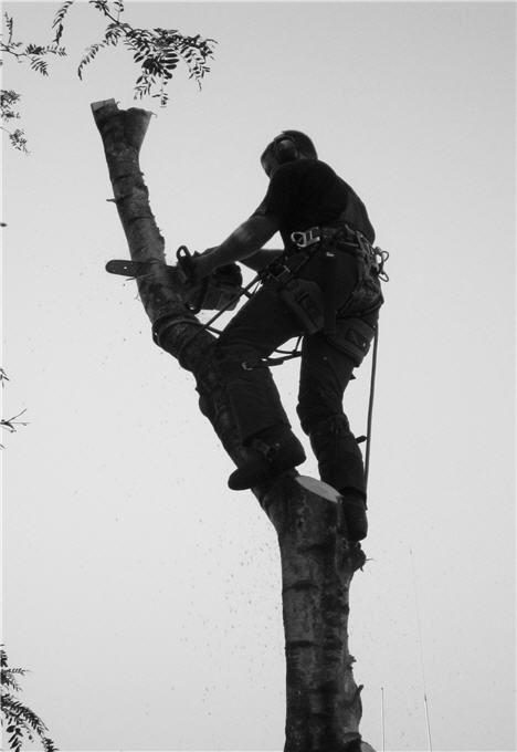 Last branch