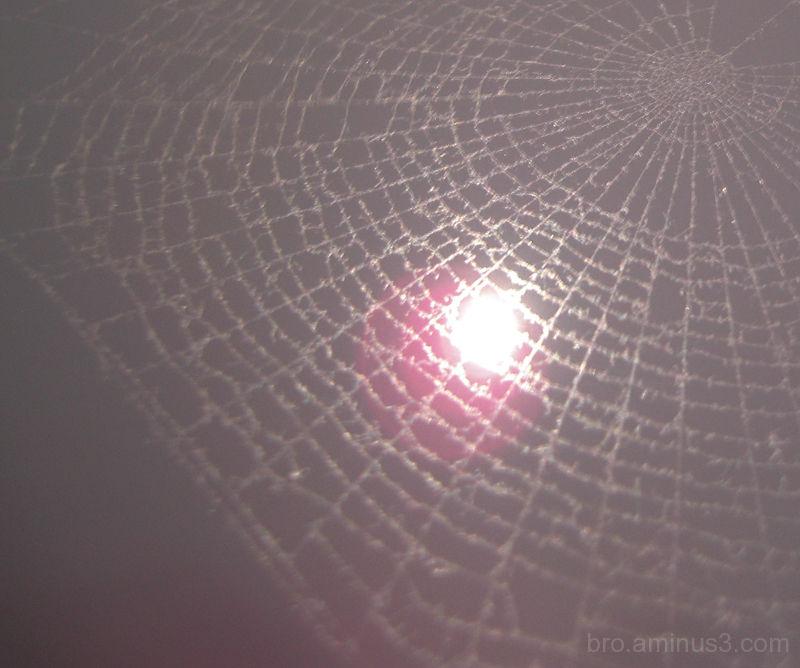 Dusty Web