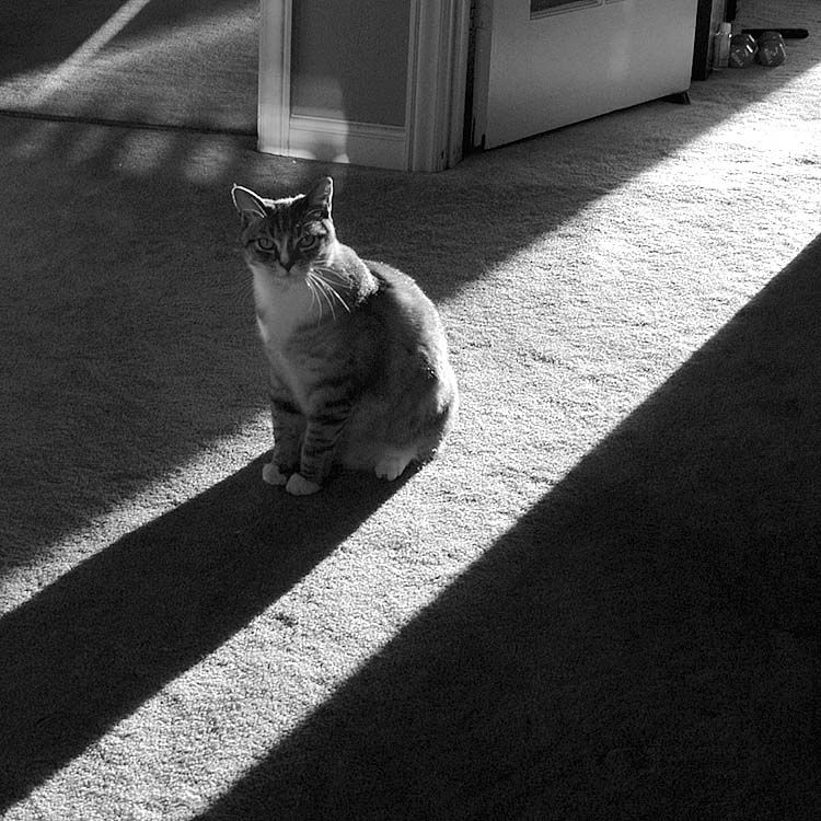 Simon in the Sunbeam