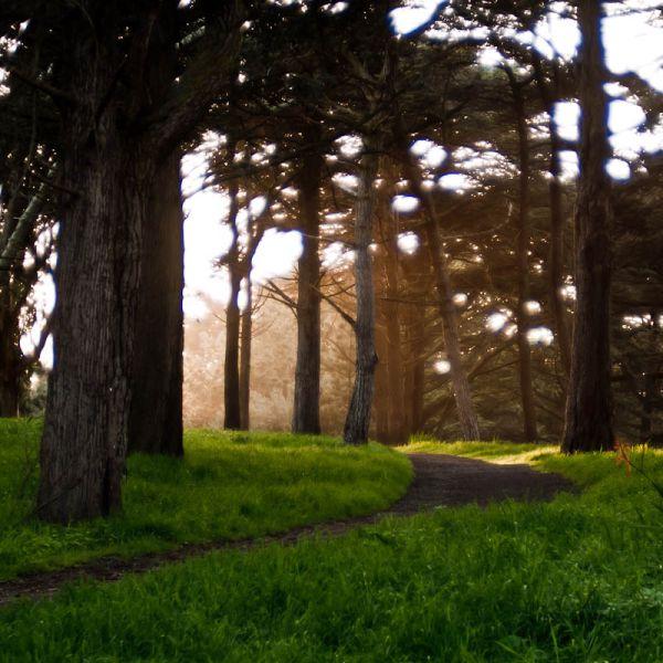 Sunset in Golden Gate Park