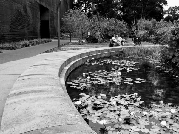 Sitting By The Lily Pond