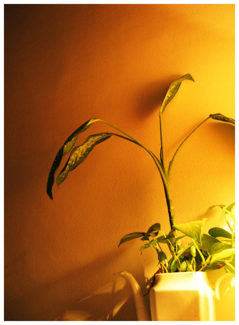 a study in warm lighting
