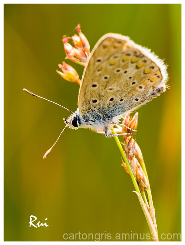 Macro Delta Llobregat Mariposa Butterfly