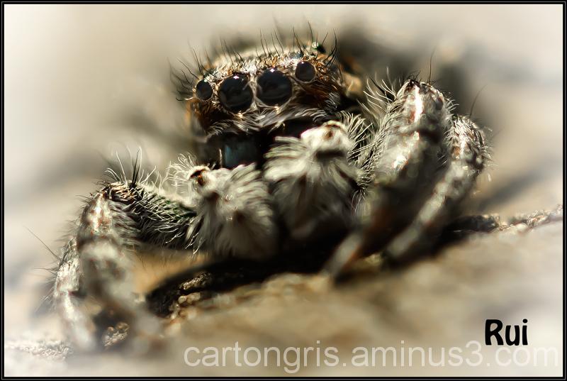 Delta Macro Llobregat Spider Saltarina