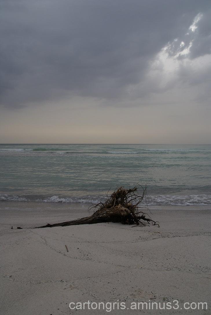 A strange shell on te shoreline