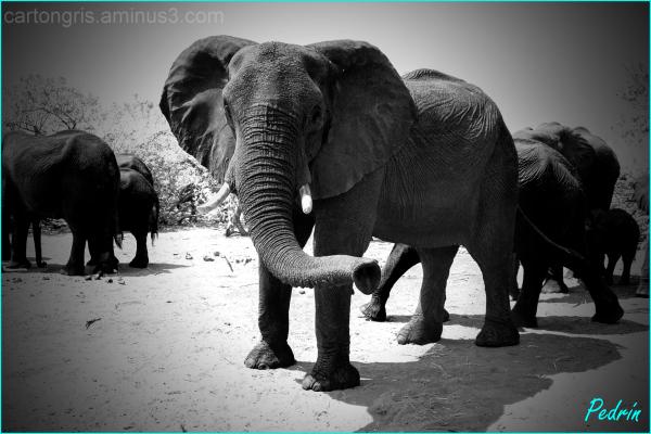 Elefantes en Bostwana