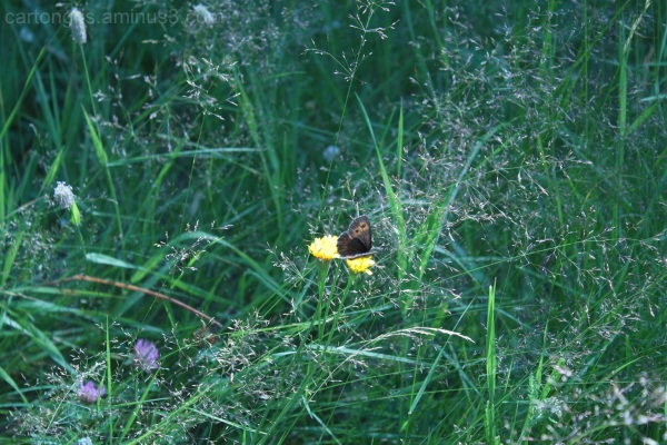 little brown butterfly in mountain landscape