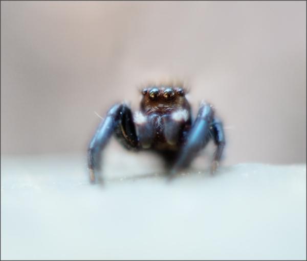 Arachnid #2