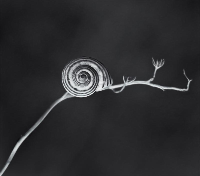 xaviheredia snail cargol caracol Xavi Heredia