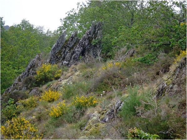 Lande de Rochefort-en-Terre (Bretagne)