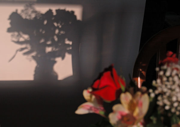 shadow from flowers on a wall