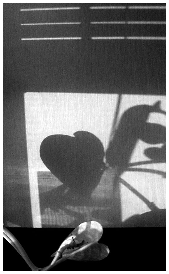 shadow of plant leaf on kitchen cabinet.