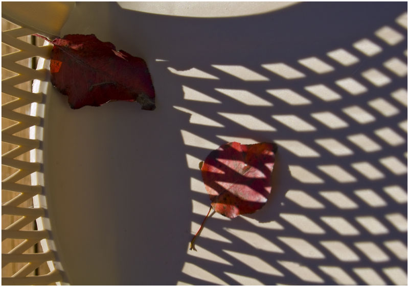 two leaves laying in plastic chair