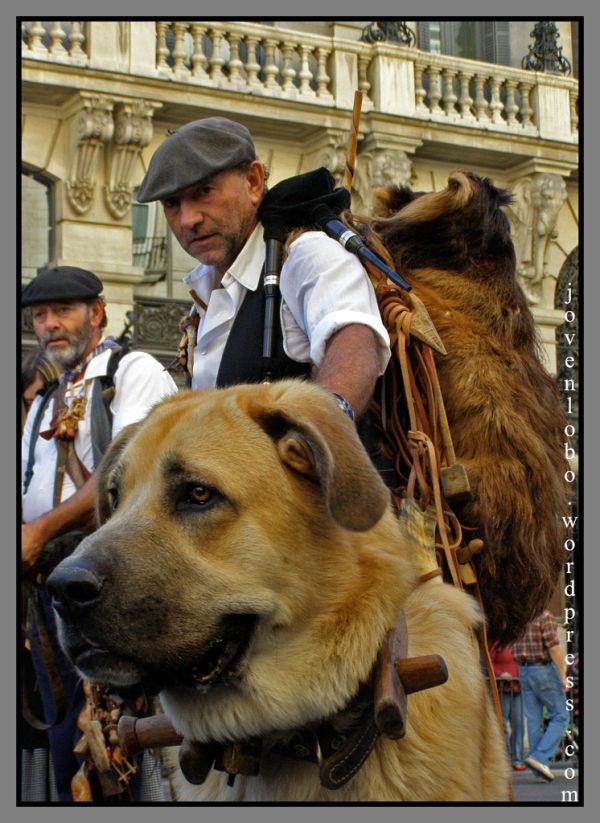 pastor perros
