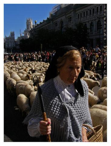 Pastoras transhumancias Madrid