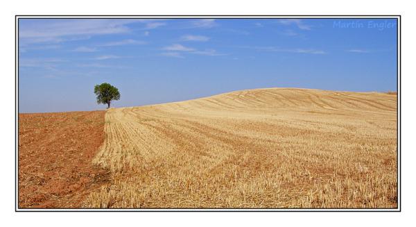 paisaje-Arbol-solitario