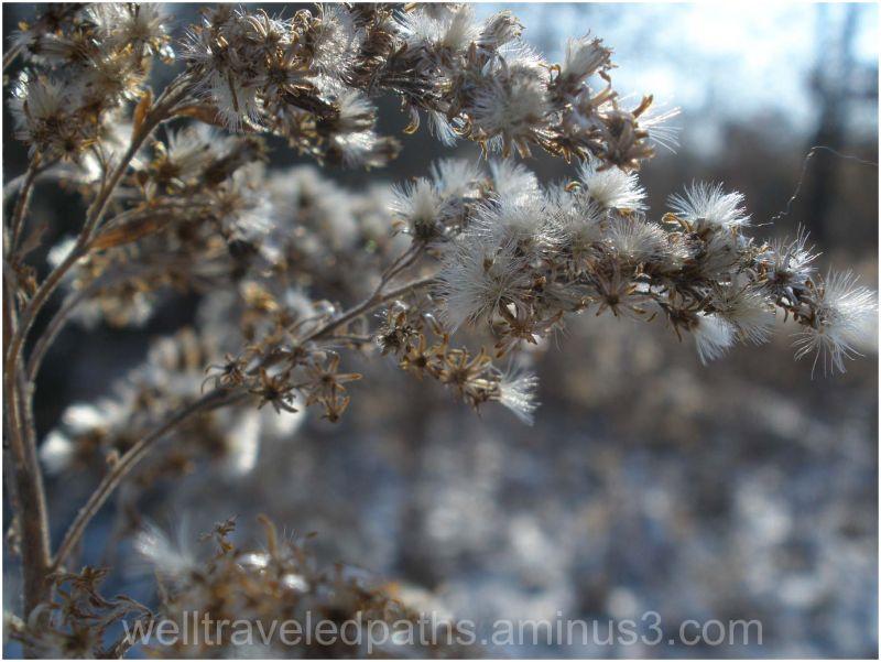 Delicate Weeds 2