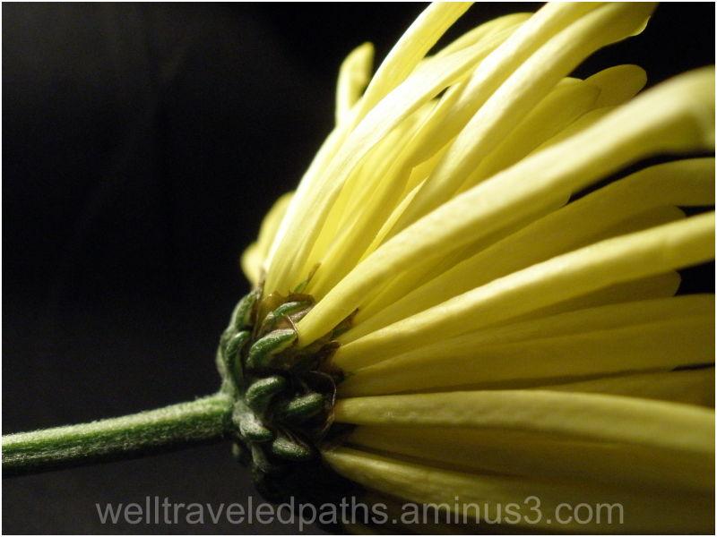 Still-life Flowers Series, 1