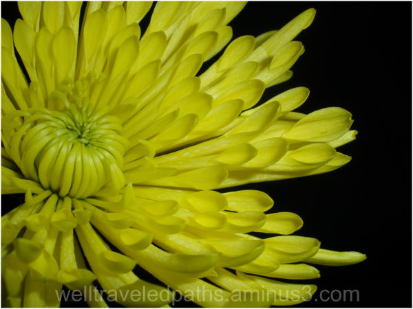 Still-life Flowers Series, 3