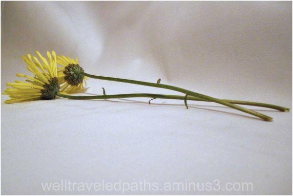 Still-Life Flowers Series, 4