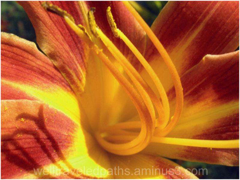 An Indiana Lilly