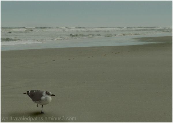 Cold Seagull