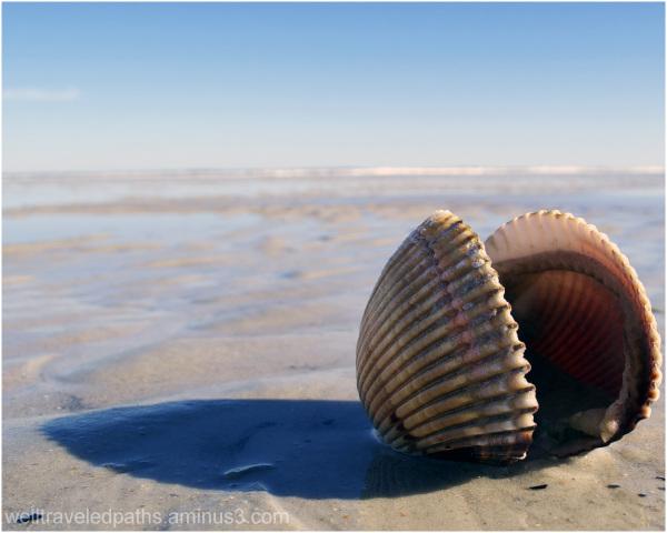 Stranded Mussel