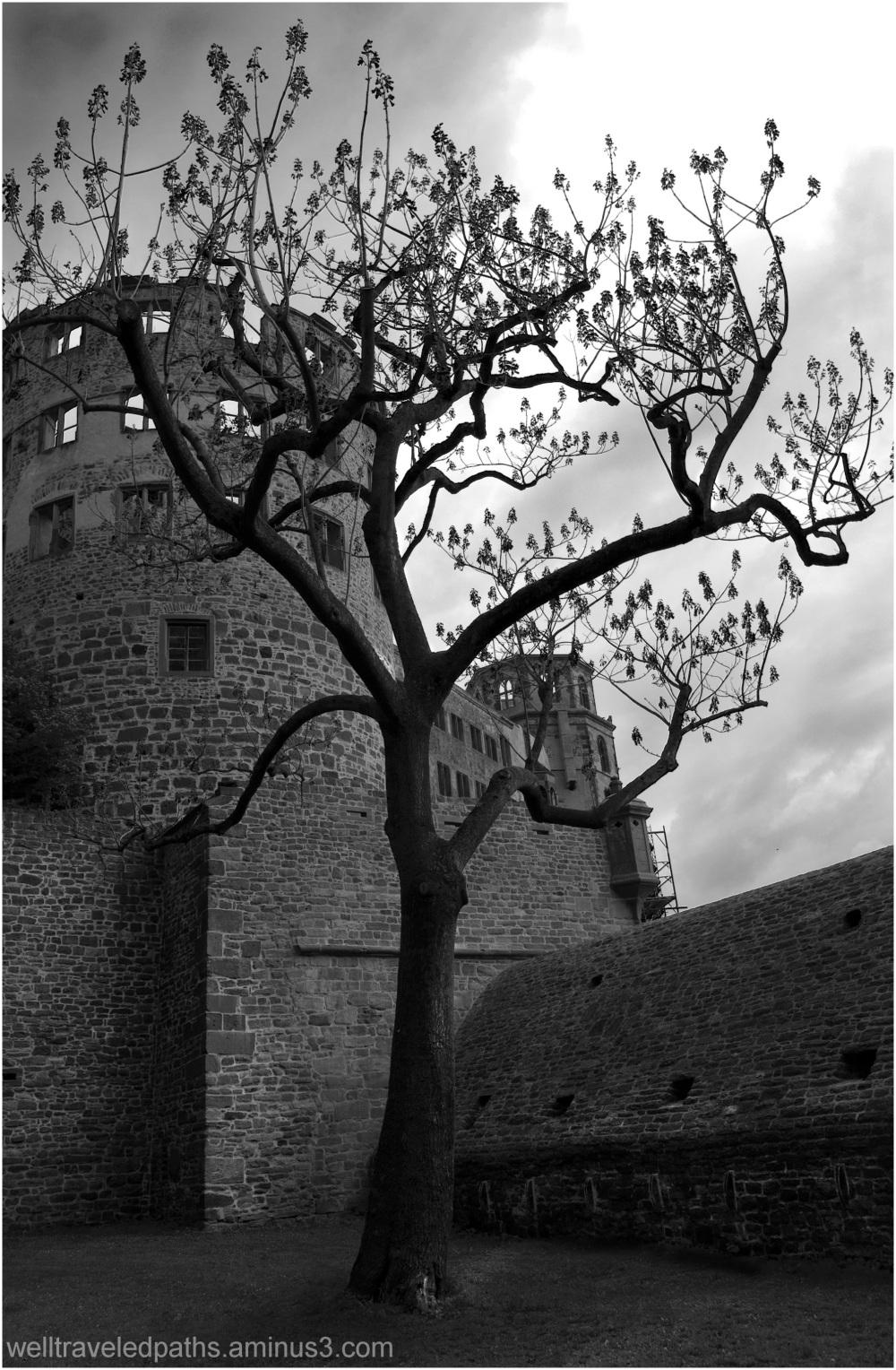 A Captivating Tree