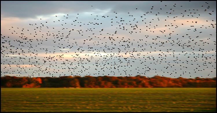 Les oiseaux....