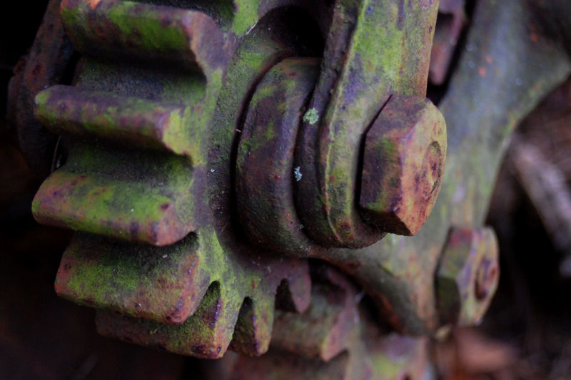 close up of mossy gears