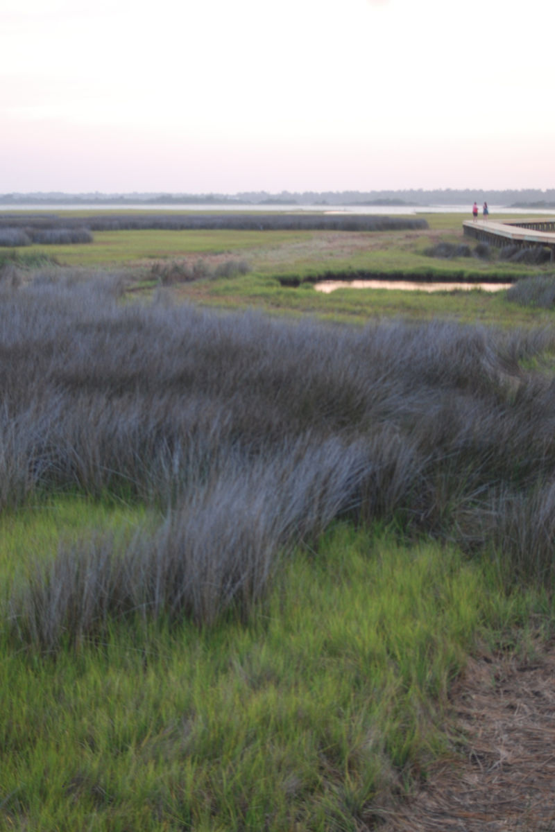Marsh grass lining Topsail Sound