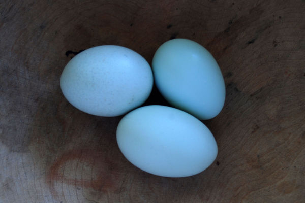 fresh eggs in indirect light