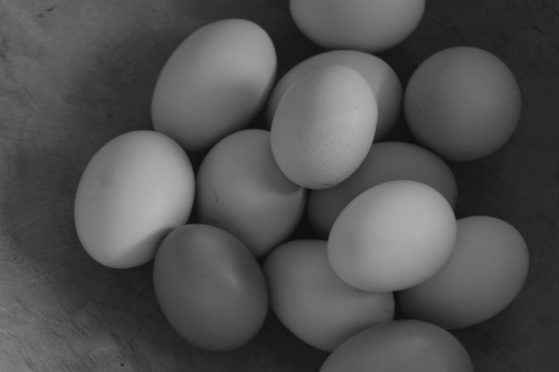 fresh eggs in black and white