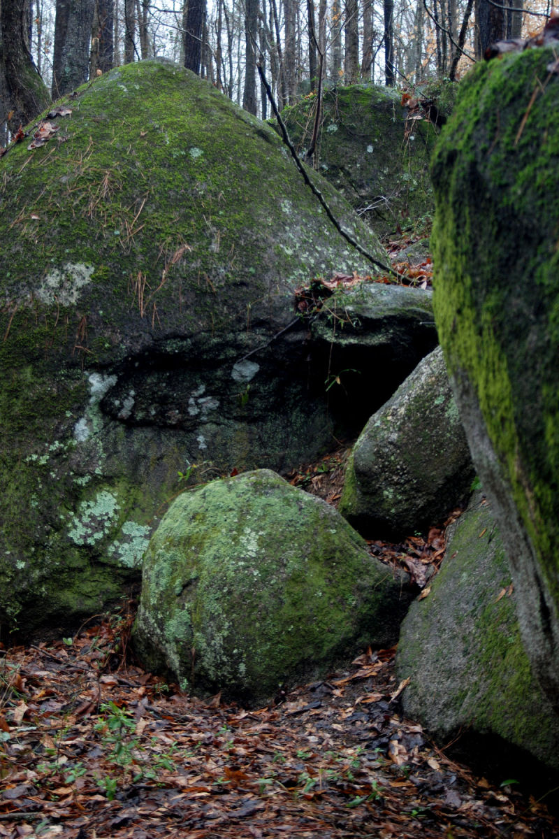 Mossy rocks in our woods