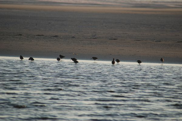 Sea birds feeding at low tide