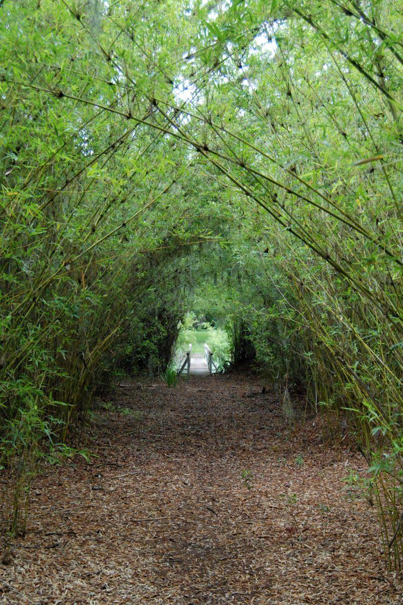 reynolds bamboo garden sapelo