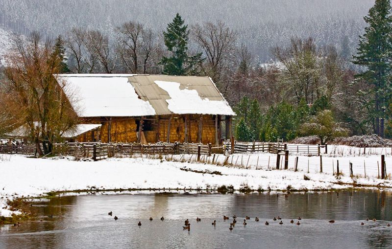 Snowy Dat at the Hay Barn