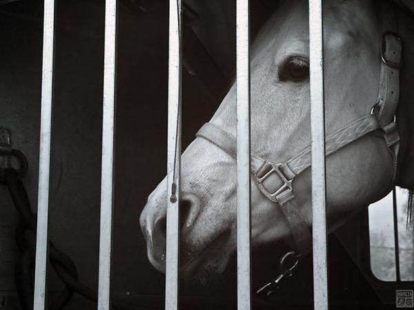 Impatient Horse