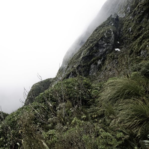 coming over the summit on the milford track