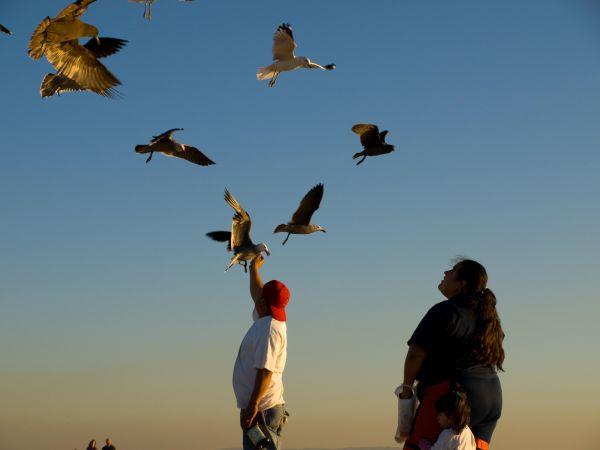 Venice Feeding Gulls