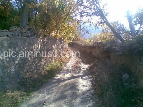 Autmn In Shiraz