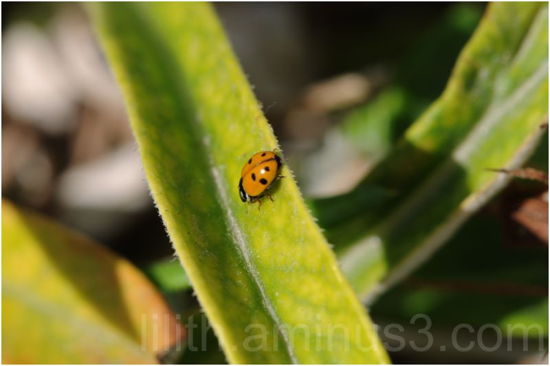 ladybird grass nature insect makro
