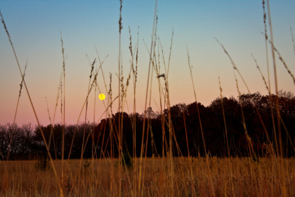 moon rising over the trees in the flint hills