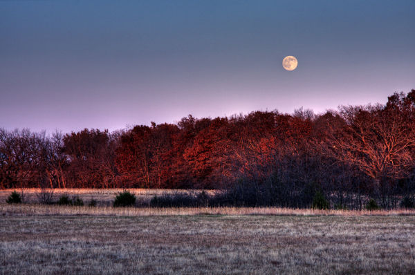 full moon rising over autumn trees
