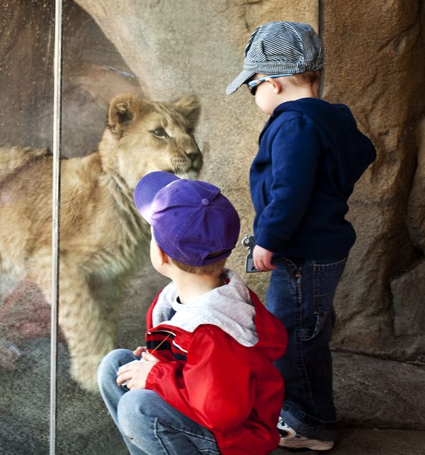 children and lion cub come face to face