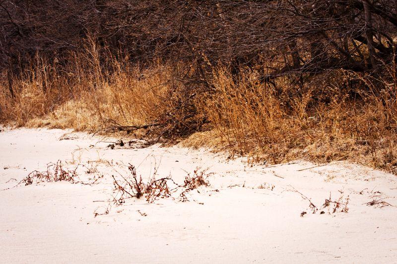 sand meets vegatation at river edge
